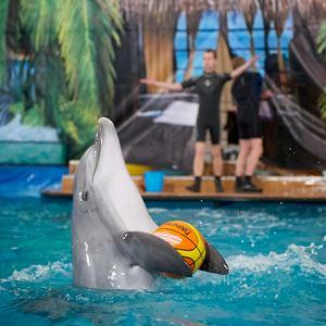 Дельфинарии, океанариумы Костромы