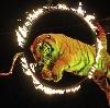 Цирки в Костроме
