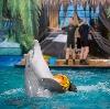 Дельфинарии, океанариумы в Костроме